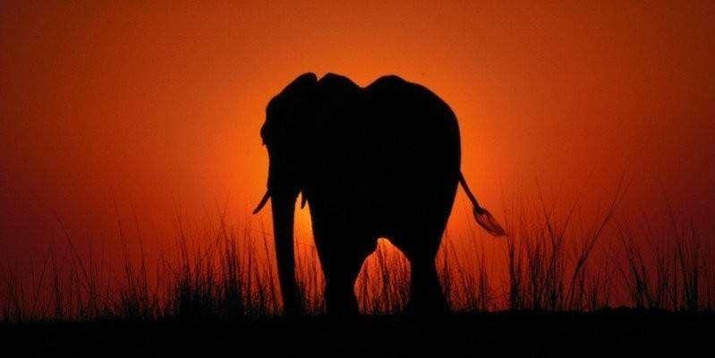 799x449xbotswana_chobe-national-park_elephant-sunset-799x449.jpg.pagespeed.ic.bHxUMxGIAN