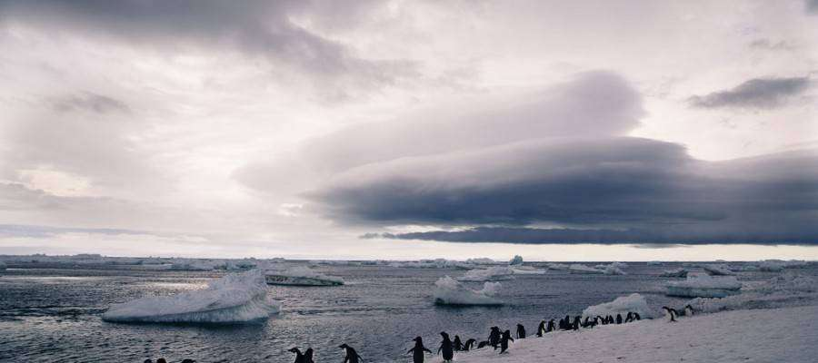 Polar-penguins-in-Antarctica-Lucy-Piper