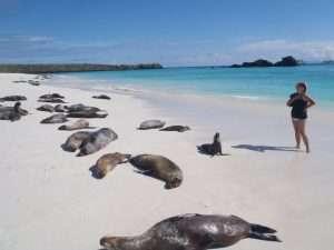 Grace - galapagos seals